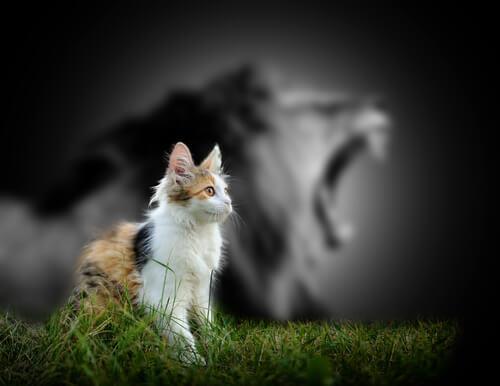Motivo por el que los gatos no rugen como los leones