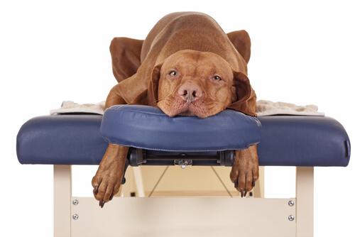СПА для вашей собаки
