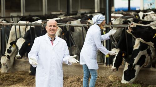 Parásitos en vacas