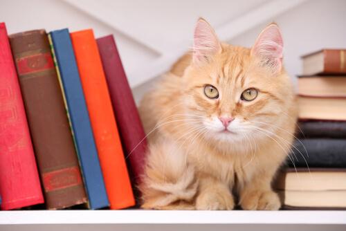 ¿Por qué los gatos han inspirado a escritores?