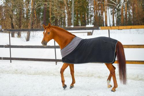Protectores de frío para caballos