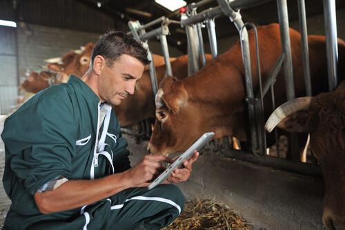 Aplicación de antiparasitarios para bovinos
