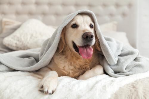 Razas de perros que mejor soportan el frío