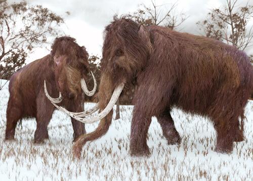 ¿Cuál es la sexta gran extinción?