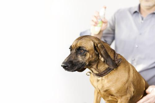 Spray antipulgas y garrapatas para perros