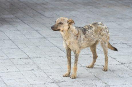 Tiña En Perros Qué Es Y Cuáles Son Sus Causas Mis Animales