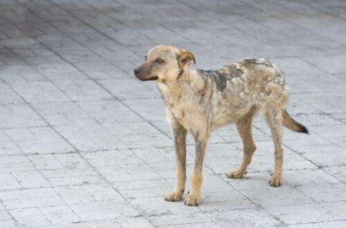 Стригущий лишай у собак: что это и каковы его причины?%