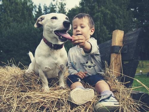 Toxocariasis en perros