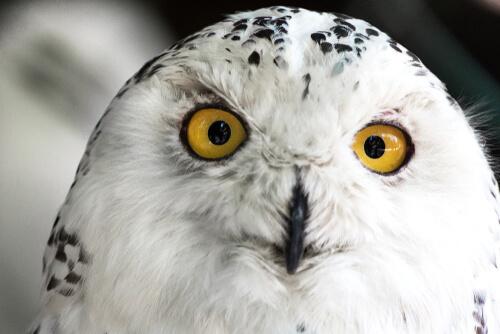 Aves rapaces: vista