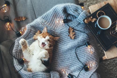 Calor en gatos: síntomas