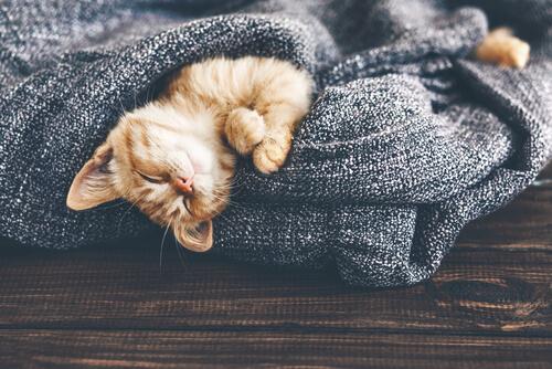 ¿Cómo afectan los cambios de temperatura a tu gato?