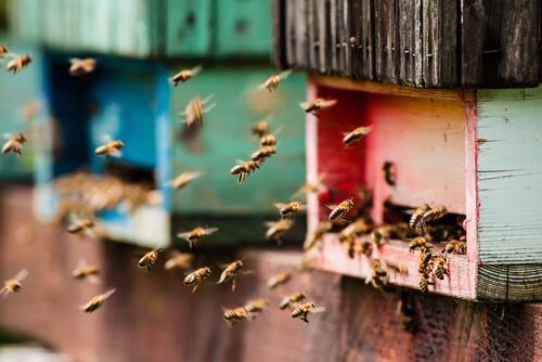 Cómo tener una colmena de abejas en casa