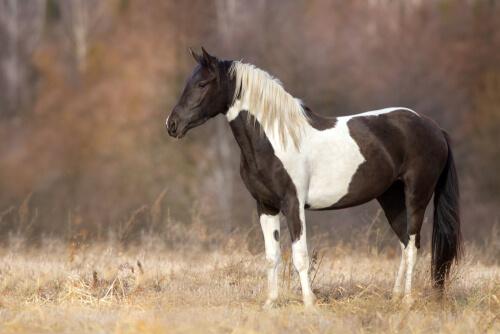 Cómo aliviar el estrés en los caballos