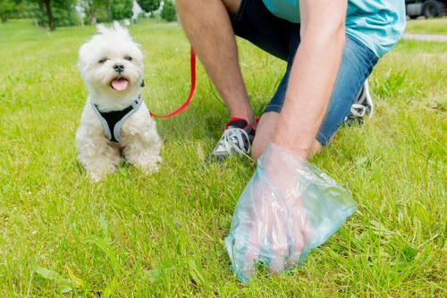 Cómo enseñar a un perro a hacer sus necesidades en la calle