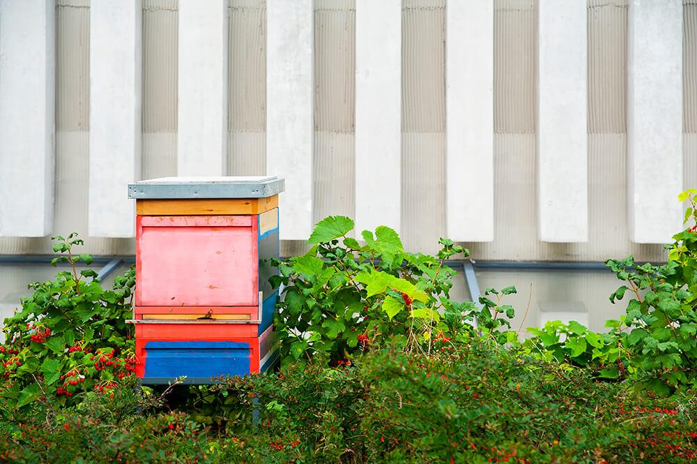 Cómo funciona una colmena de abejas
