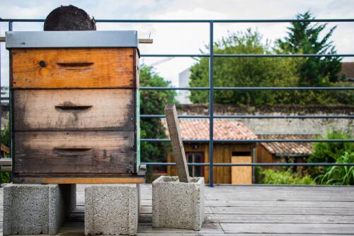 Cómo hacer una colmena de abejas casera