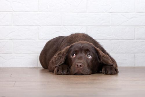 Вещи, которые ваша собака ненавидит, а вы не знали
