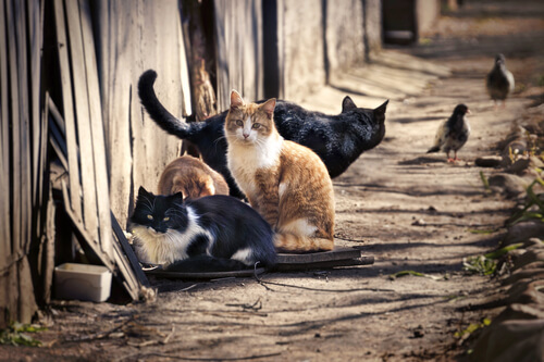 Cuántos gatos existen