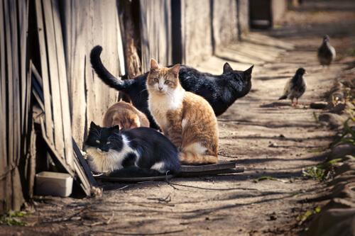 ¿Cuántos gatos existen en todo el mundo?