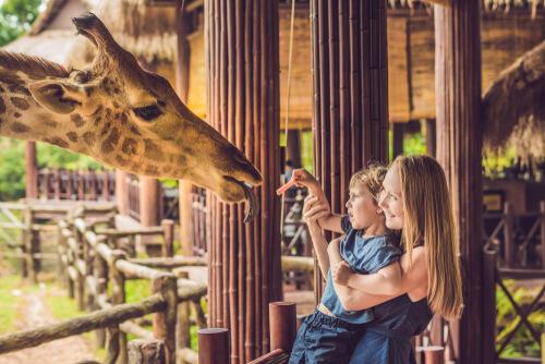 Dar de comer animales en el zoo
