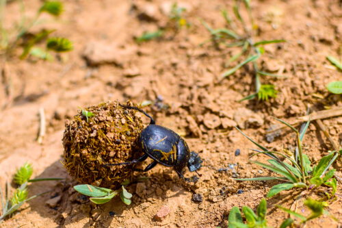 La importancia de los invertebrados de los suelos