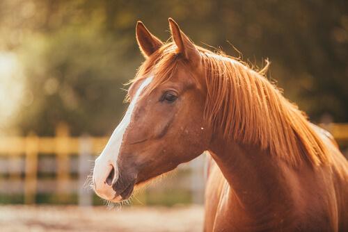 El estrés en el caballo