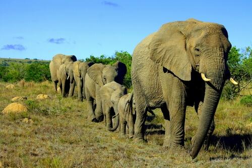 Estructura social en elefantes