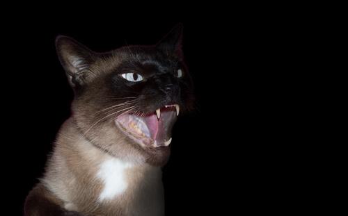 Фобия с кошками: что это такое и как действовать