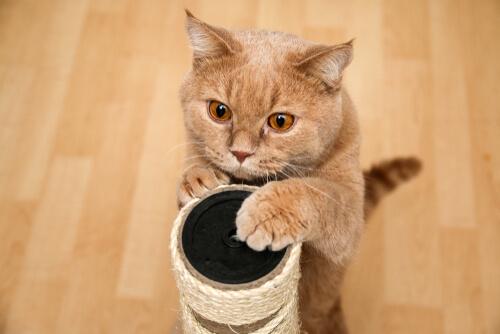 Скребок для кошек: почему моей кошке это не нравится?