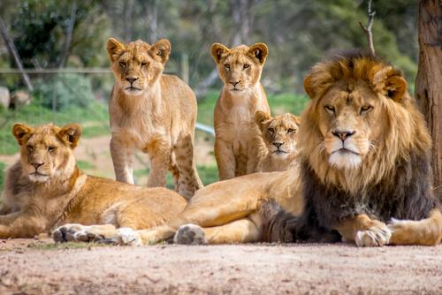 Jerarquía y sumisión en el sistema social de los animales