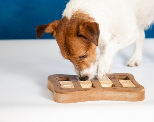 Juegos para la mente de tu mascota