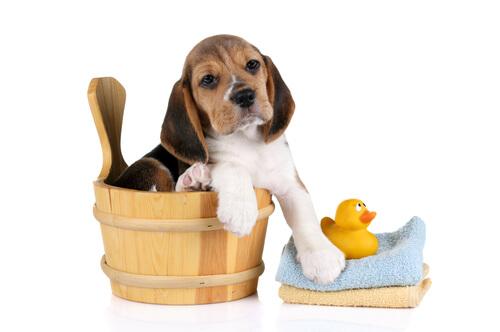 Limpieza en perros
