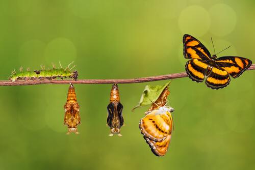 Los ciclos de vida más cortos y largos del reino animal