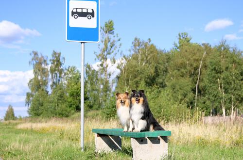 Los perros subirán a los autobuses urbanos de Madrid