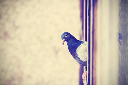 Manera de ahuyentar palomas