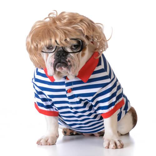 Mascota con ropa