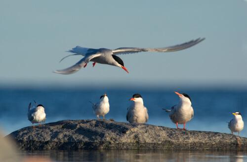 Migraciones de aves