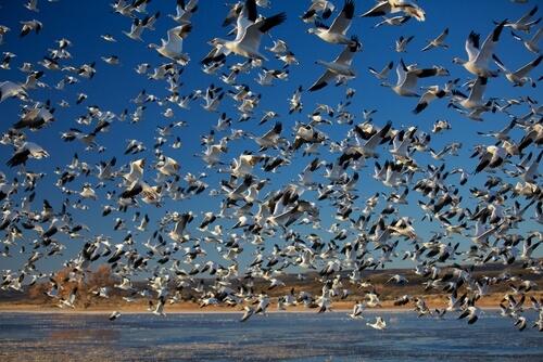 Las migraciones masivas más sorprendentes
