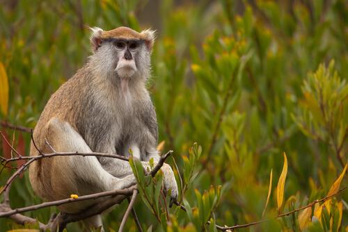 Conoce al mono patas