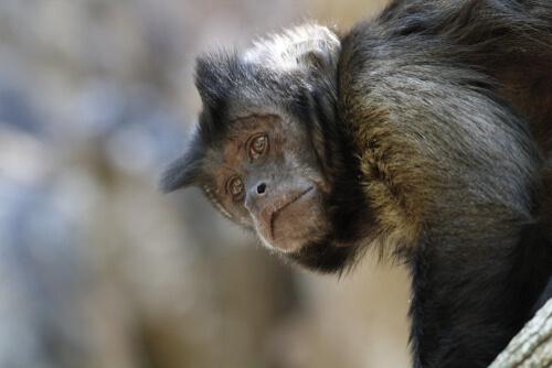 Un centro de rescate de animales peligra en Bolivia