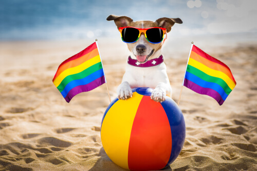 Возможно ли, что собаки гомосексуальны?