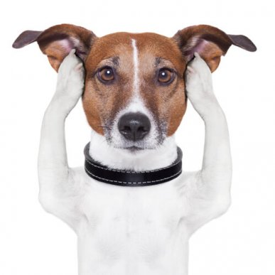 Шестое чувство у собак с глухотой