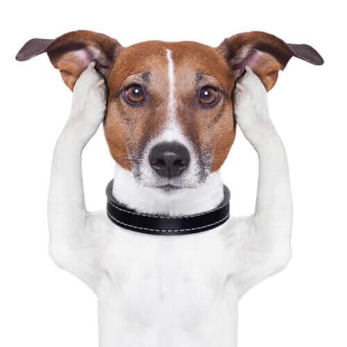 Sexto sentido en perros con sordera