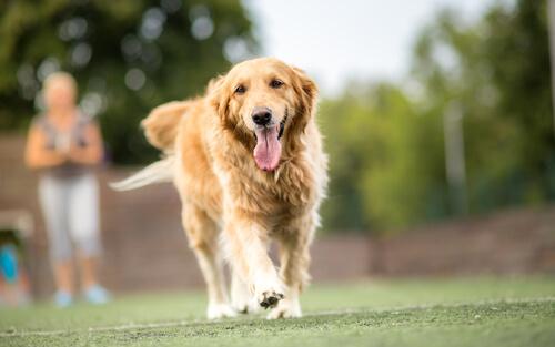 Perros huelen enfermedades