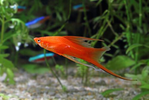 Рыба-меч: уход