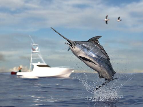 Рыба-меч, характеристики и курьезы