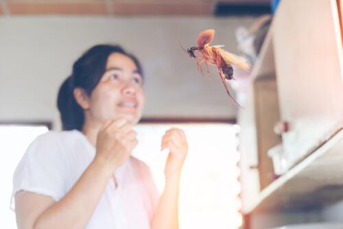 Por qué vuelan las cucarachas