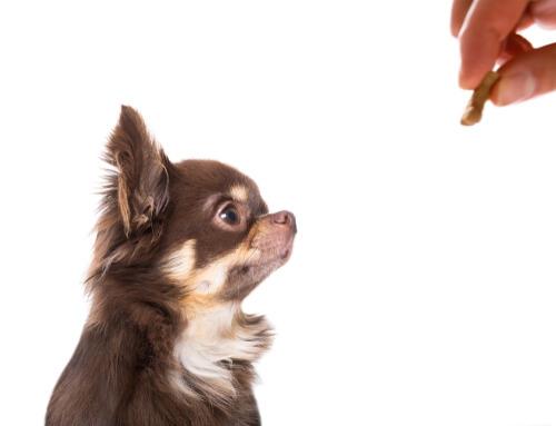 Premio para un perro