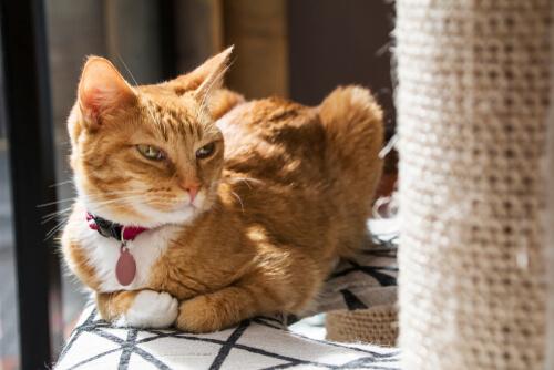 Rascador para gatos: ¿por qué no le gusta a mi gato?
