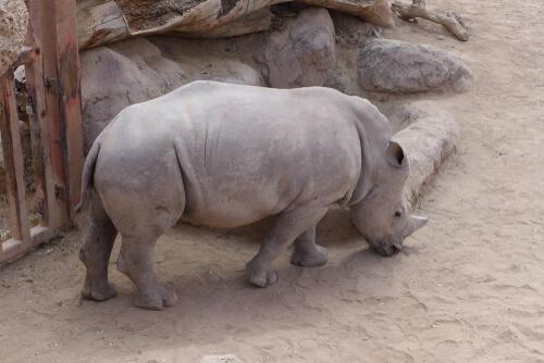 ¿Todos los animales corren el mismo riesgo de extinción?